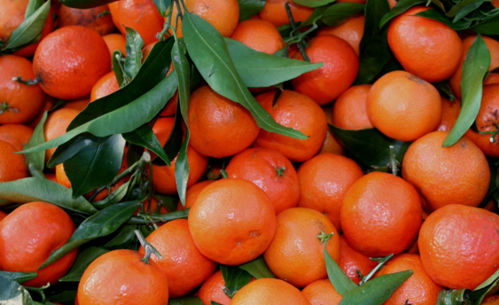 mandarines 1 (2)