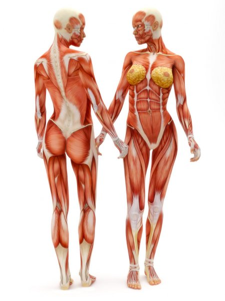 Formes-corporelles-